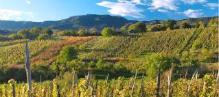 Park prirode i vinska cesta